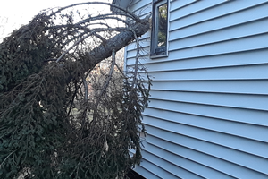 Windstorm damage creating potential ladder fuel fire hazard to building (Photo by MSU Extension)