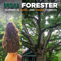Cover image of the 2017 edition of the MSU Forester