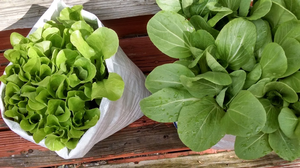 Smart Gardening with Vegetables 101 online course now available