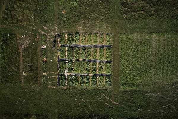 Drone view of urban soil management research plots