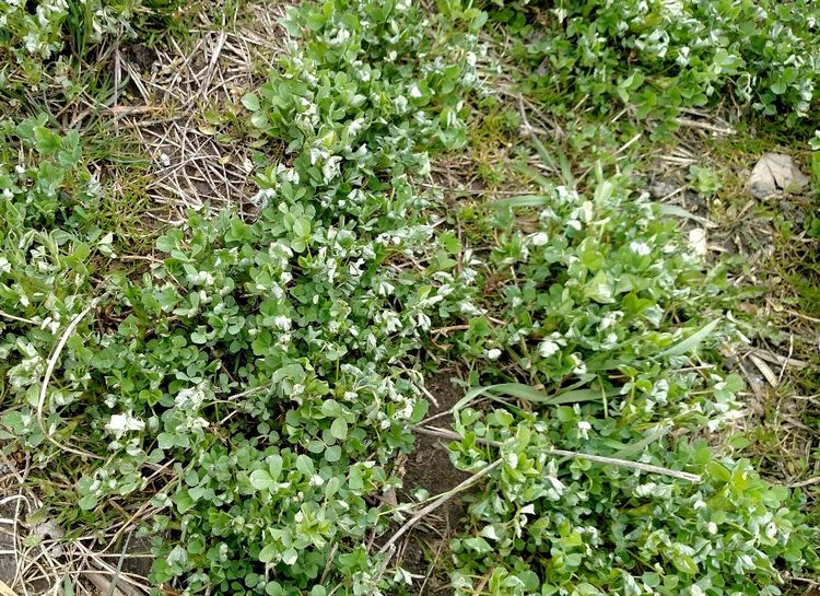 Alfalfa is resuming growth in southwest Michigan fields.