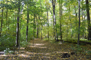 MSU Forestry partners with Detroit-based institutions to expand natural resources education