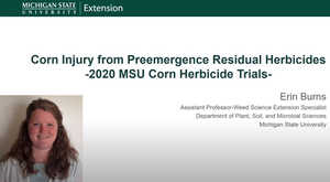 Corn injury from preemergence residual herbicides in 2020 MSU corn herbicide trials