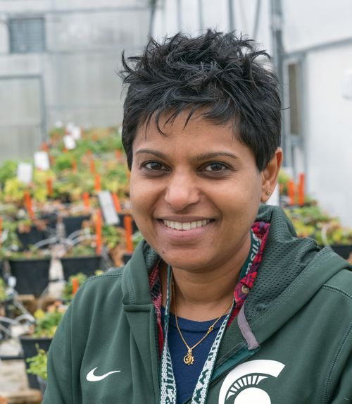 Cholani Weebadde is Michigan State University's plant breeder for international programs.