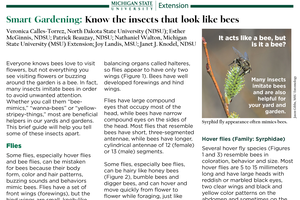 Smart Gardening: Know the insects that look like bees