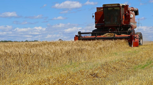 Pinnacle malting barley harvested near Buckley, MI in 2015. Photo credit: Michigan Brewers Guild