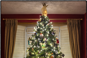 How did evergreen trees become a symbol for Christmas?