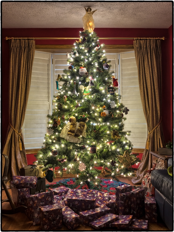 How Did Evergreen Trees Become A Symbol For Christmas Msu Extension