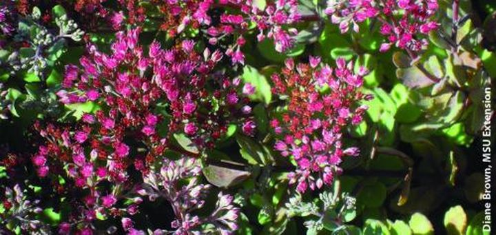 Flowers Throughout The Year Pollinators And Pollination