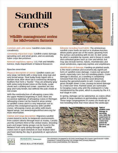 Photo of first page of Sandhill Cranes Article.