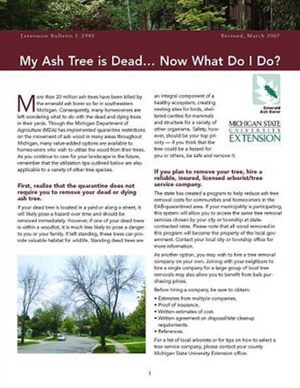 My Ash Tree is Dead … Now What Do I Do? (E2940) - MSU Extension