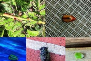 A collage of of what I considered to be alien-like insects.