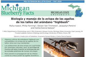 Michigan Blueberry Facts: Biology and Management of Stem Gall Wasp in Highbush Blueberries (E3443) in Spanish