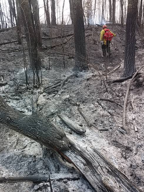 The damage of a forest post-burn.