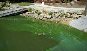 green colored water near a boat ramp