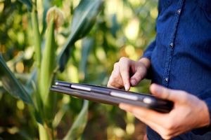 Farmer using tablet in corn field.