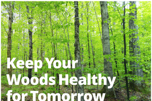 Keep your woods healthy for tomorrow