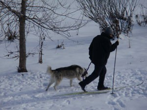 MSU AgBioResearch's Willie Kirk snowshoeing with his dog