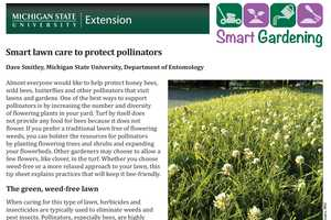 Smart lawn care to protect pollinators - MSU Extension