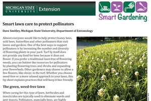 Smart lawn care to protect pollinators