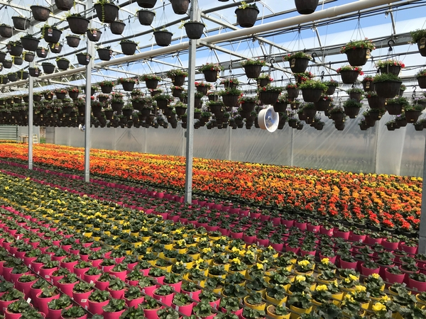 Superb Registration For Online Greenhouse And Horticultural Home Interior And Landscaping Dextoversignezvosmurscom