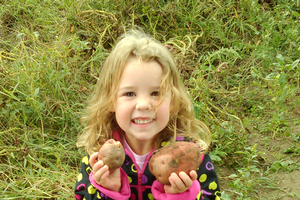 Homegrown potatoes tell you when to harvest them