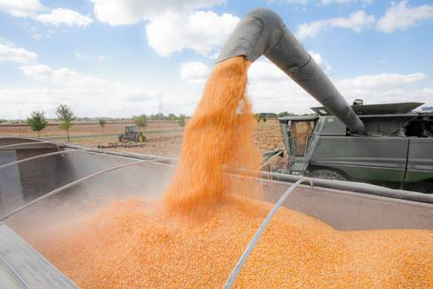 Pouring corn into a truck