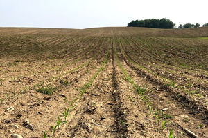 Late planted corn: should I change my seeding rates?