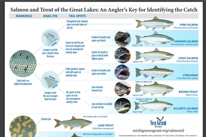 Salmon and trout identification poster.