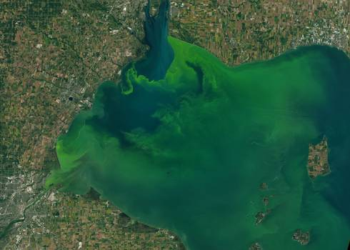 A representation of how much algal is spreading in Lake Erie