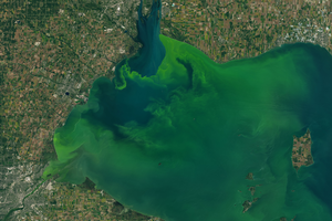 Harmful algal bloom forecast 2019