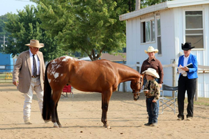 One of the best ways people with an interest in judging can practice is to coach or assist a competetive youth horse judging team. Photo by Amanda Radtke | Michigan State University Extension