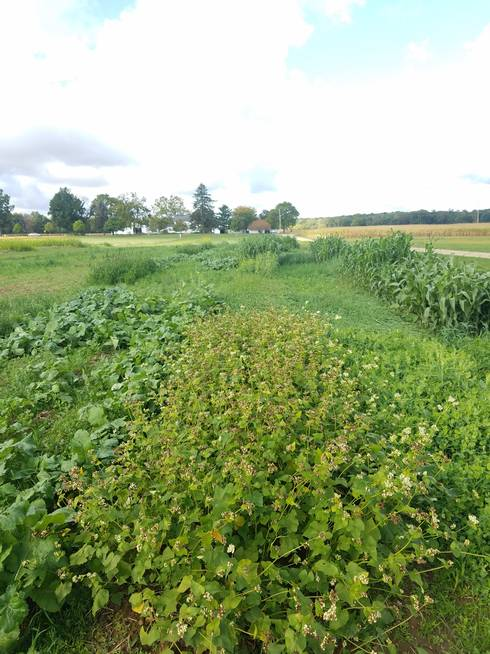 Cover crop research and demonstration plots