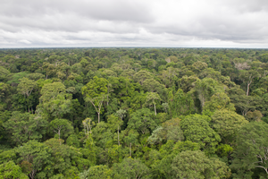 Tapajós National Forest in Pará state in the Brazil Amazon, an example of a moist tropical evergreen forest that covers much of the Amazon basin. The Tapajós forest is located about 20 miles south from the savanna sites in Alter do Chão. Photo taken by Marielle N. Smith from the top of a 60 m