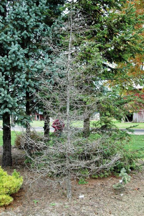Winter tests limits of plant cold hardiness - MSU Extension