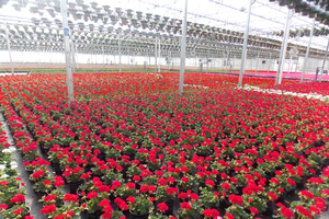 The 2015 Michigan Greenhouse Growers Expo will feature numerous sessions for greenhouse floriculture and vegetable growers.