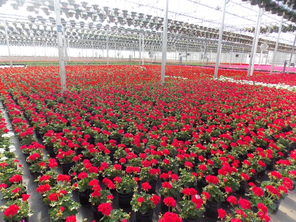 The 2015 Michigan Greenhouse Growers Expo Will Feature Numerous Sessions  For Greenhouse Floriculture And Vegetable Growers