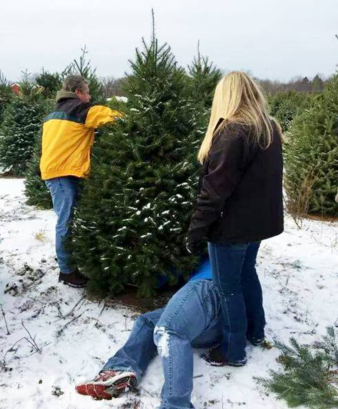 When selecting a farm-grown Christmas tree, make sure it is green and the needles don't fall off too easily.