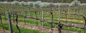Register for the 2021 Michigan Statewide Grape Spring Kickoff webinar on March 23