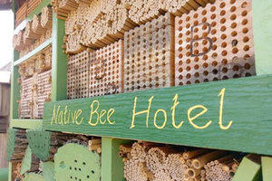The MSU bee hotel is now home to many different bee species. Learn which ones at BeePalooza