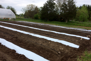 Plastic mulch has been laid in outdoor plantings. Photo by Flint Ingredient Co.