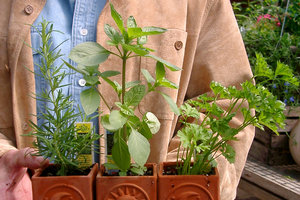 "Want to grow healthy herbs? Attend ""Grow it, Cook it, Eat it!"" workshop on Aug. 23"