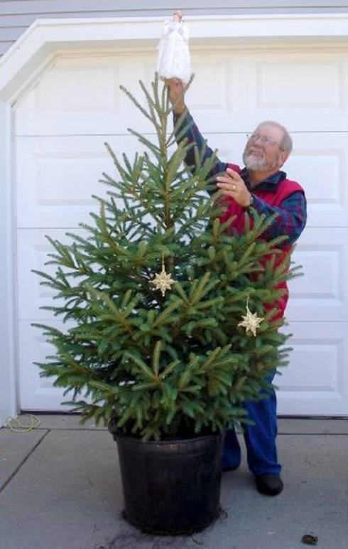 Living, container-grown Christmas tree. Photo credit: Frank Genovese, Candy Cane Tree Farm