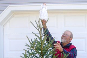 Living Christmas trees: Another real tree option