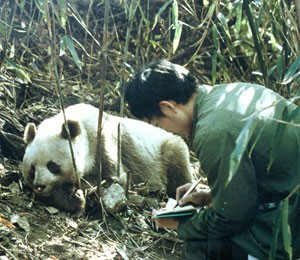 Even the most optimistic scenarios show that bamboo die-offs would effectively cause prime panda habitat to become inhospitable.