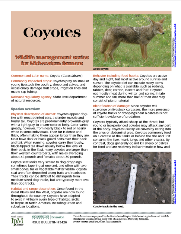 Photo of first page of Coyotes article.