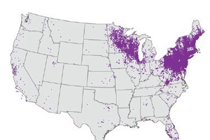 An image of the United States, affected by Lyme disease