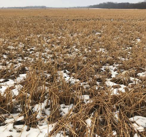 2019 prevent plant field with oat and radish cover crop