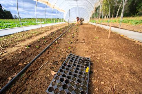 Transplant production will be one of the first workshop offerings – teaching farmers how to start vegetable crops early to get a jump start on the short Upper Peninsula growing season. | Michigan State University Extension