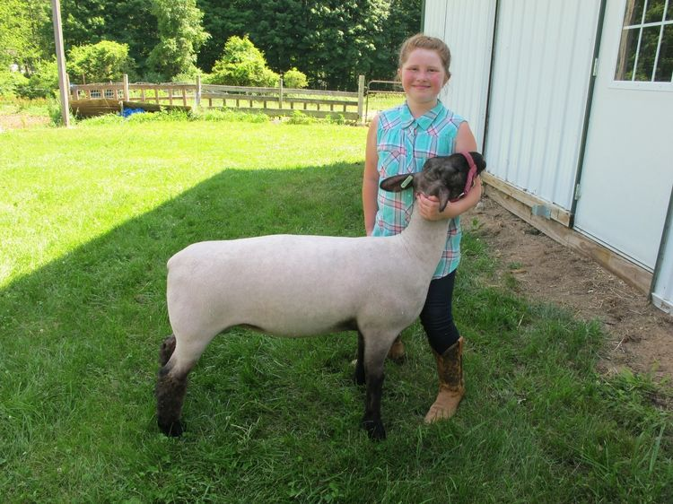 10-year old girl with sheep.